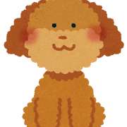 toy_poodle